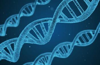 A genomi mutációs mintázatok felhasználhatósága a daganatos betegségek diagnosztikájának és kezelésének javítására