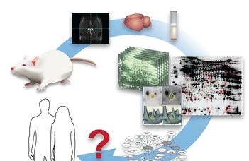 Az Alzheimer-kór (AD) állatmodelljeiből származó proteomikai markerek komplettálása