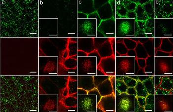 Prediktív biomarker-jelöltek elemzése az onkológiai betegségek kezelésének javítására